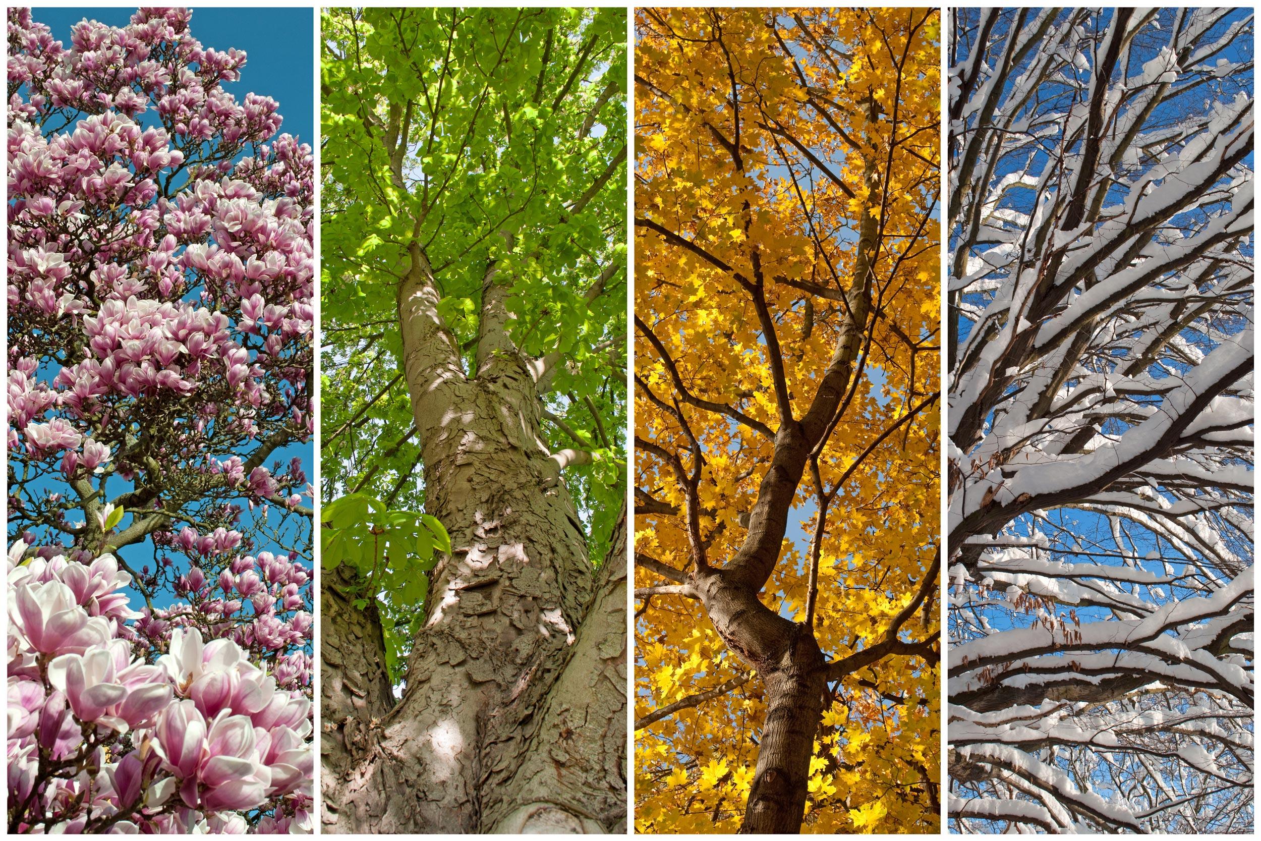 Frühling Sommer Herbst Winter Und Frühling Stream